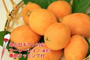 長崎産 びわ 茂木びわ 12〜15玉 500g 化粧箱入 ギフト 4t