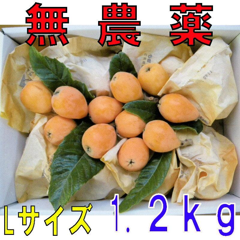 長崎産 無農薬 茂木びわ Lサイズ 1.2kg 25玉前後 びわの葉入り 産地直送