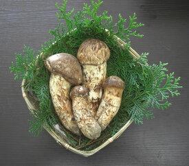 松茸 国産 つぼみ 特選品 330g 2〜5本程度入 竹かご付 まつたけ マツタケ 長野産 ギフト 産地直送 S10