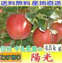 【10%OFFクーポン対象】送料無料 産地直送 長野産 減農薬 有機肥料使用 陽光りんご ご家庭用 約4.5kg12〜16個入 訳あり 林檎 りんご