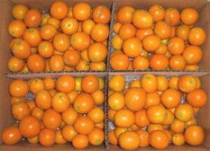 2022年分予約 減農薬 きんかん 金柑 たまたま 3kg 3Lサイズ 宮崎 完熟 贈答用 産地直送 SSS