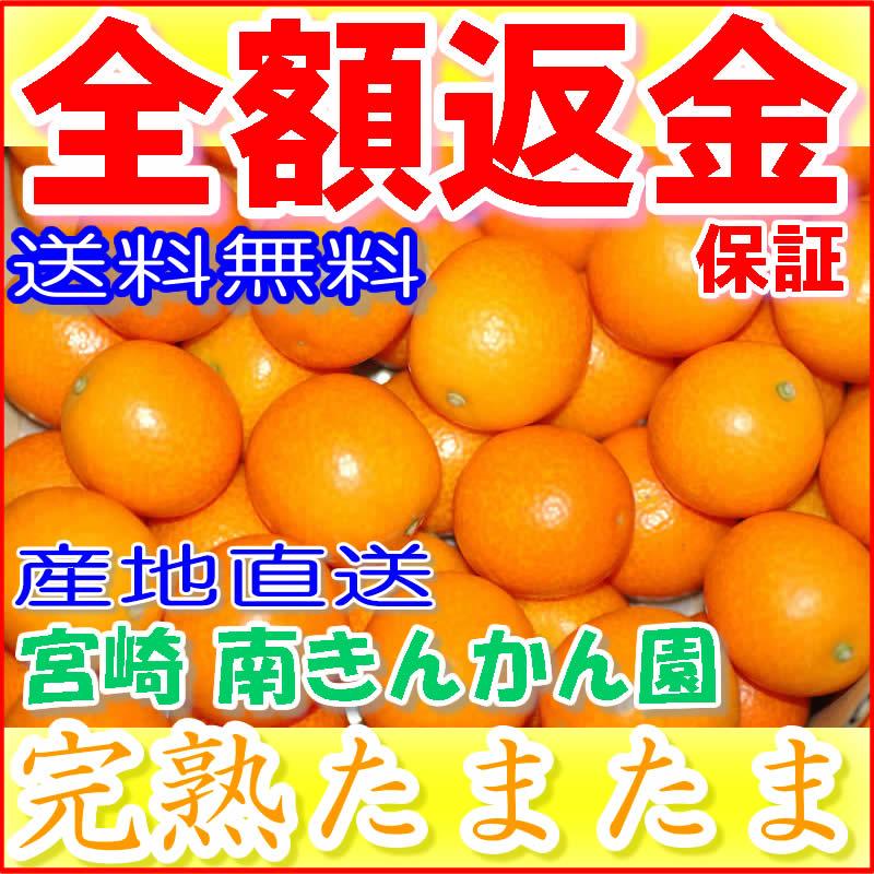 【10%OFFクーポン対象】宮崎産 減農薬 完熟 きんかん たまたま 1kg Lサイズ 贈答向け 産地直送