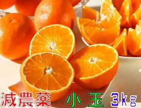 減農薬 紅まどんな と同品種 みかん あいか 約3kg 小玉サイズ 愛媛 産地直送 ore 大三島 SSS
