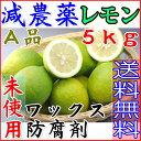 【ポイント10倍+10%OFFクーポン対象】減農薬 愛媛産 レモン 5kg A品 国産 産地直送 ore