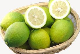 【10月以降分予約】訳あり 減農薬 愛媛 レモン 3kg 加工用 国産 瀬戸内 大三島 ore SSS 3h