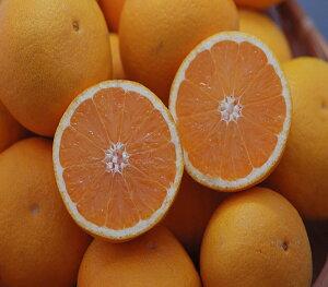 2021年分予約 訳あり 愛媛産 減農薬 かがやき 小玉サイズ 約10kg 産地直送 ore 清見 清見オレンジ 清見タンゴール サマー清見 大三島 SSS