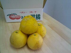 訳あり 減農薬 熊本県天草産 晩柑 約10kg 小玉サイズ加工用 ジューシーオレンジ