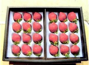 2021年分予約 低農薬 福岡 あまおう 苺 いちご 贈答用 800g 大粒24〜32玉 化粧箱入 産地直送 SSS