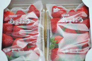12月以降分予約 低農薬 福岡 あまおう 苺 いちご 贈答用 2パック 540g 大粒 産地直送 ギフト