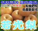 送料無料 産地直送 低農薬 有機肥料使用 岡山産 若光梨 約4キロ 3L サイズ 大玉9玉 産地箱入 贈答向け品質 梨 和梨 セール 若光