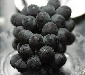 2020年分予約 岡山産 ぶどう ピオーネ 大粒1房入 贈答用秀品 ブドウ 葡萄