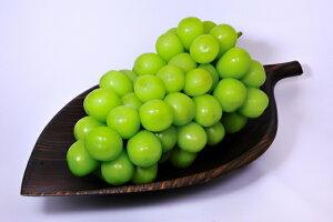 2020年分予約 低農薬 糖度20度 返金保証 シャインマスカット ぶどう 1.8kg 小粒3〜4房入 贈答用 化粧箱入 葡萄 ブドウ  産地直送 mi SSS