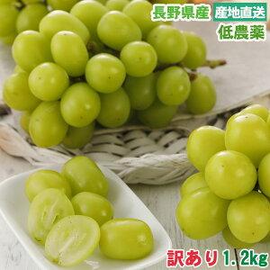 【2021年10月出荷】低農薬 訳あり シャインマスカット ぶどう 1.2kg 小粒3〜4房入 葡萄 ブドウ 長野 産地直送 10t