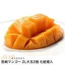 送料無料宮崎県産完熟アップルマンゴー贈答向け2L大玉2個化粧箱入宮崎マンゴー完熟マンゴーギフトフルーツギフト