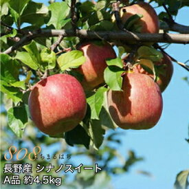 2020年10月以降 減農薬 シナノスイート りんご A品 約4.5kg 8〜25個入 長野産リンゴ 林檎 産地直送 小山 SSS 10g