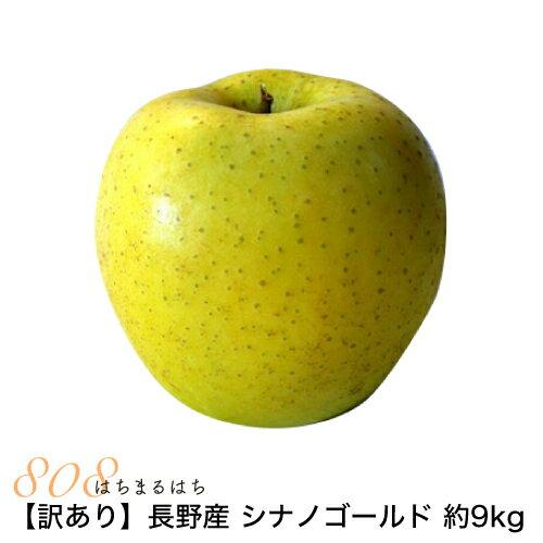 訳あり】減農薬 長野 シナノゴールド りんご 約9kg 16〜50個入 リンゴ 林檎 産地直送 小山