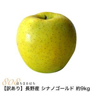 訳あり 減農薬 長野 シナノゴールド りんご 約9kg 16〜50個入 リンゴ 林檎 産地直送 小山 NG 10g