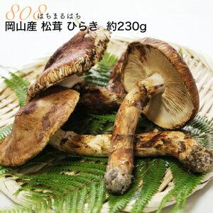 国産 松茸 ひらき 小さめ 約230g 2〜8本程度 まつたけ マツタケ 利平栗1kgオマケ付き 岡山 SSS