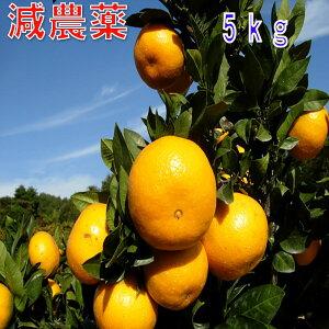 和歌山産 減農薬 みかん 約5kg 2S〜Lサイズ混合 ミカン 蜜柑 産地直送 SSS