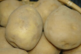 静岡産 三方原馬鈴薯 男爵 5kg 20〜30個入 大玉秀品 L〜2Lサイズ じゃがいも ジャガイモ 5h