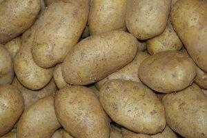 日本一早くてうまい新じゃが 鹿児島県沖永良部産 馬鈴薯 5kg 20〜30個入 メークイン L〜2Lサイズ 秀品 新じゃがいも 新じゃが芋 新ジャガイモ おきのえらぶ