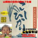 【新米送料無料】令和2年度石川産こしひかり玄米30kg  金沢北部山間地限定