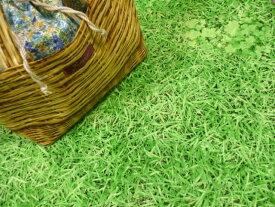 【キャンバス】【30cmパネル単位続けてカット】芝生でゴロン   ぷらんぷちいくす