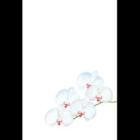 楽天市場胡蝶蘭コレクションホビーの通販