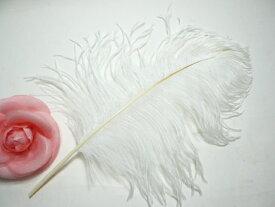 羽 パーツ オーストリッチ(1本) 白 テール 35〜40cm 羽 パーツ根 フェザー 手芸材料 パーツ ナチュラルラッピングツール