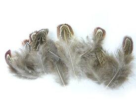 羽 パーツ 雉 アーモンド(背毛)(10枚)(ナチュラル)1枚5〜9cm #132 羽 パーツ根 フェザー 手芸材料 パーツ コサージュやアクセサリーに