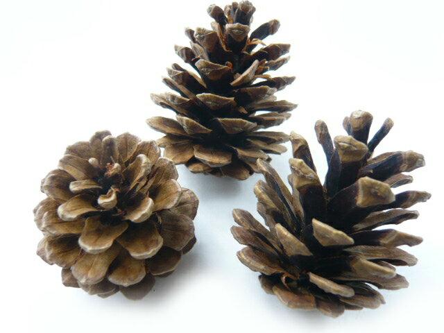 松かさ アソート 3〜6cm(大袋50個入)24207-000 松ぼっくり クリスマス 天然素材