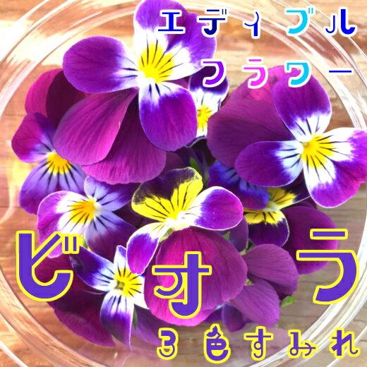 2月末までお買い得価格!ビオラ/3色すみれ 20輪(食用花)伊勢志摩産・水耕栽培