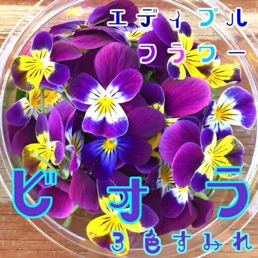 2月末までお買い得価格!ビオラ/3色すみれ 50輪(食用花)伊勢志摩産・水耕栽培