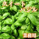 業務用フレッシュバジル(生スイートバジル/Sweet basil)500g ファーム海女乃島・水耕栽培