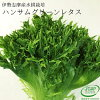 ハンサムグリーンレタス(おかげ野菜)