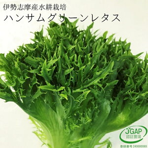 ハンサムグリーンレタス 120g サラダ 生野菜 水耕栽培 伊勢志摩産 産地直送 おかげ野菜