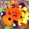 エディブルフラワー3種