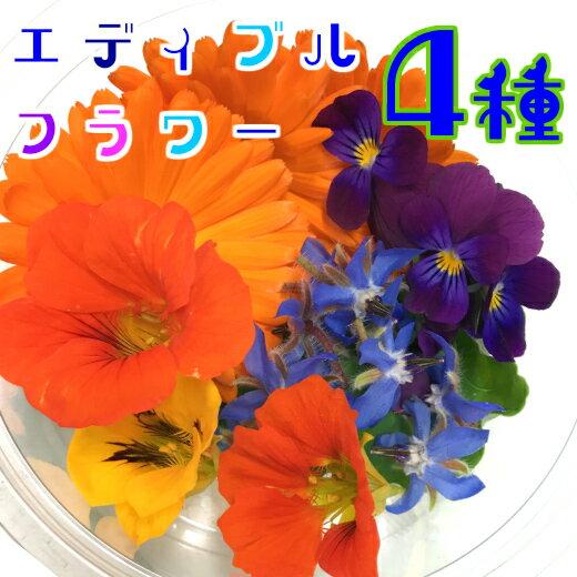 エディブルフラワー4種(食用花)伊勢志摩産・水耕栽培