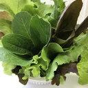 新鮮5種類のおまかせ野菜  サラダセット 150g   伊勢志摩産・水耕栽培