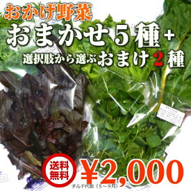 JGAP認証農場 水耕栽培 おかげ野菜 おまかせ5種さらにおまけ野菜2袋