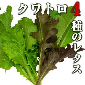 クワトロ/4種のレタス(ベビーリーフ)50g 伊勢志摩産・水耕栽培
