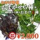 伊勢志摩の自然で育った珍しい水耕栽培野菜 おかげ野菜おまかせ5種さらにおまけ野菜2種