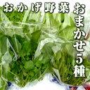 伊勢志摩の自然で育った珍しい水耕栽培野菜!おまかせ5種野菜200g ファーム海女乃島