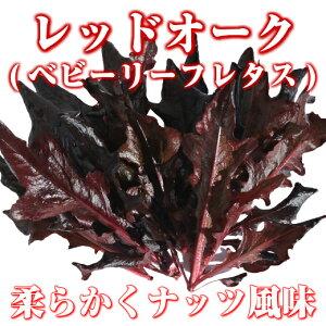 レッドオーク(ベビーリーフレタス)30g 伊勢志摩産・水耕栽培