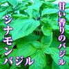 バジル(シナモンバジル)30g