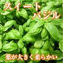 フレッシュバジル(生スイートバジル/Sweet basil)50g ファーム海女乃島・水耕栽培