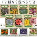 エディブルフラワーの種セット 選べる 5袋 エディブルフラワー 食用花 種セット タネ ハーブ グリーンフィールドプロ…