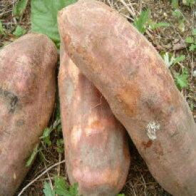 【収穫が遅れているためすこし出荷時間がかかります】お試しセット!【送料無料】奇跡の野菜 ポリフェノールたっぷり・フラクトオリゴ糖の塊!ヤーコン2kg【生芋】今年は小ぶりです