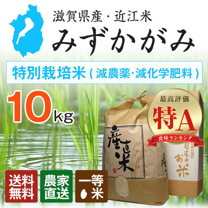 【近江米】特別栽培米 一等米 29年産新米 みずかがみ 滋賀県産 10kg 送料無料(北海道・沖縄・一部離島は別途送料)