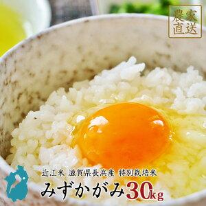 米 みずかがみ 30kg 令和元年 滋賀県産 近江米 備蓄 買いだめ【送料無料】